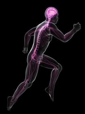 Skiing Physiology - The Central Nervous System